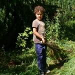 ramassage des arbres (2)