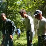 ramassage des arbres 3